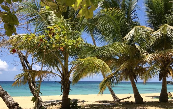Our Afternoon at the Picturesque Playa Grande, Dominican Republic